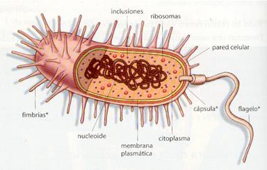 Biologíasur 2 2 Célula Procariota Y Eucariota Diversidad